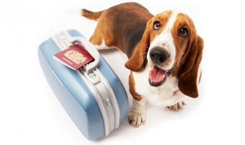 Comment bien voyager avec son chien : que dit le droit ?