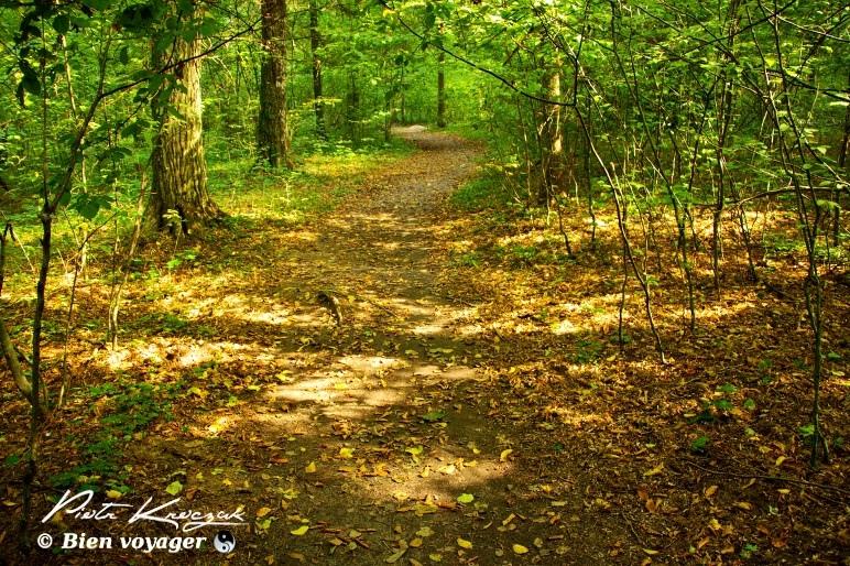 Pologne balade les parcs nationaux polonais : Ojcow et Bialowieza