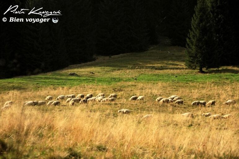 pologne tatras (13)