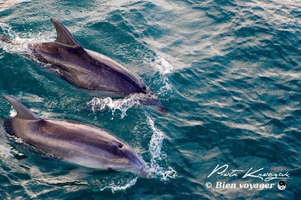 nouvelleZelandedauphins