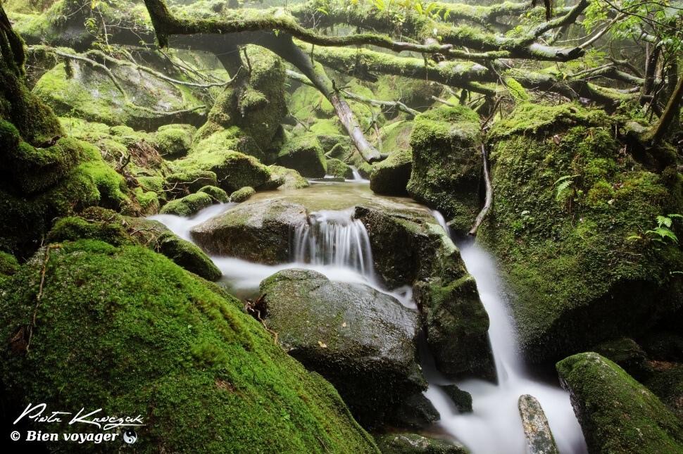 #Japon Dans la forêt primaire et enchantée de Yakushima.