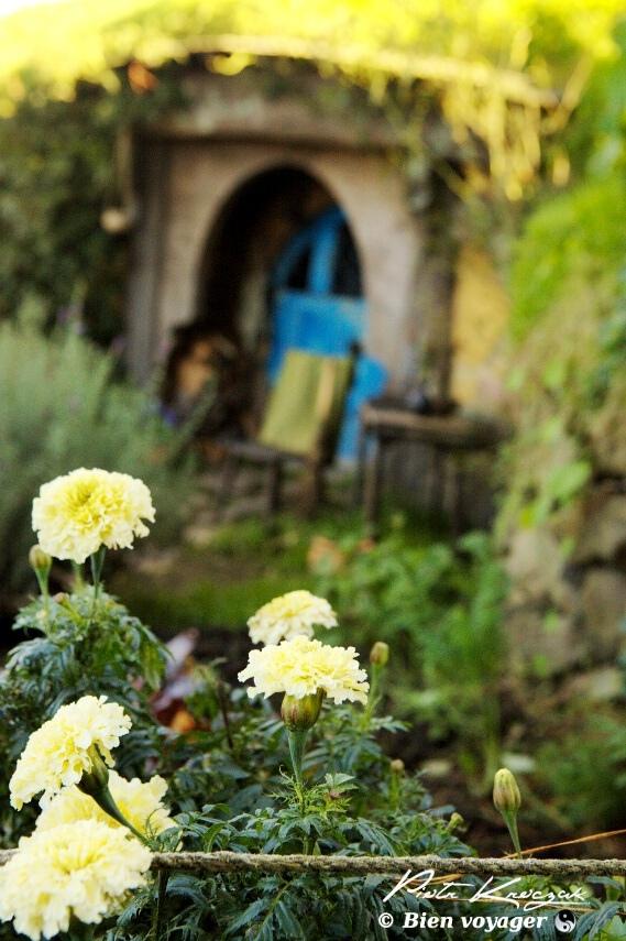 hobbitebourg nouvelle zelande (5)