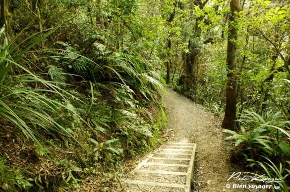 nouvelle-zelande tongario trek (29)