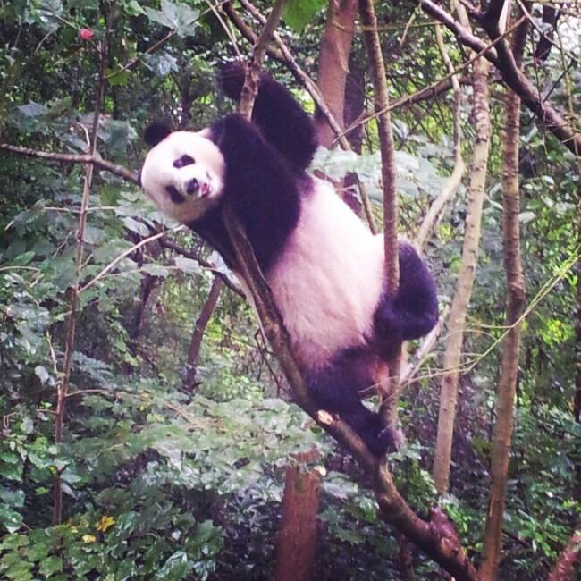 #Chine Un mois de voyage en Chine en photos instagram et des conseils