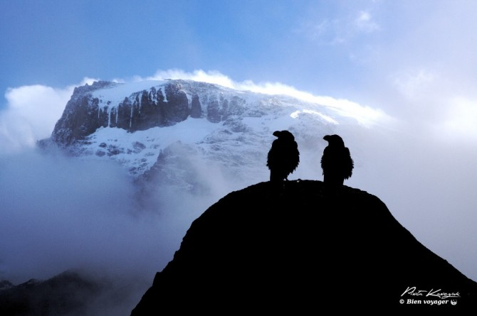Kilimandjaro marcheme matin
