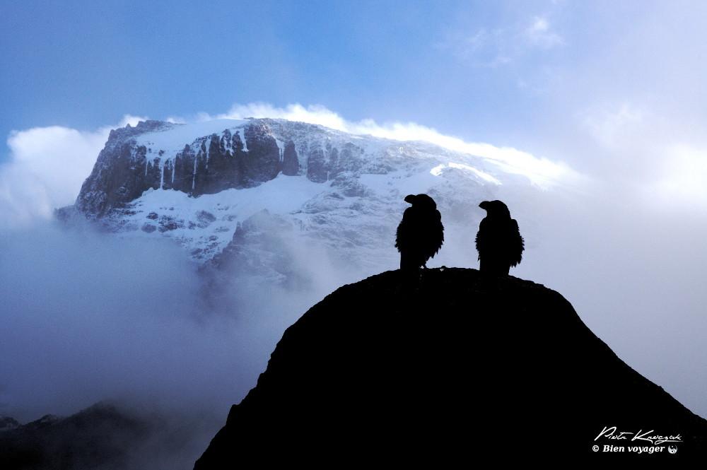 Ascension du Kilimandjaro [2]