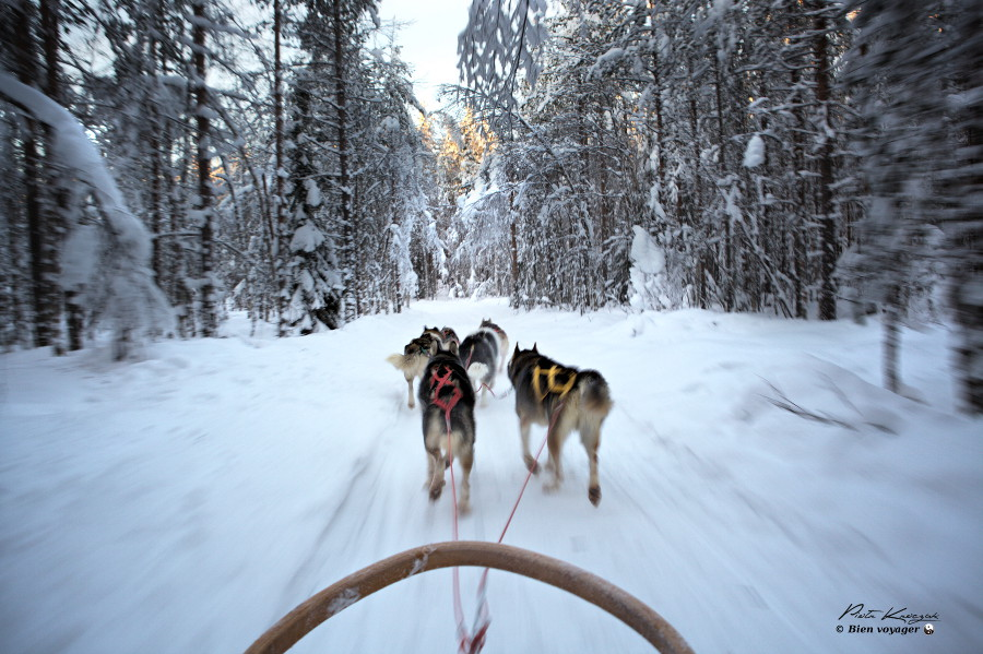 Rovaniemi-husky