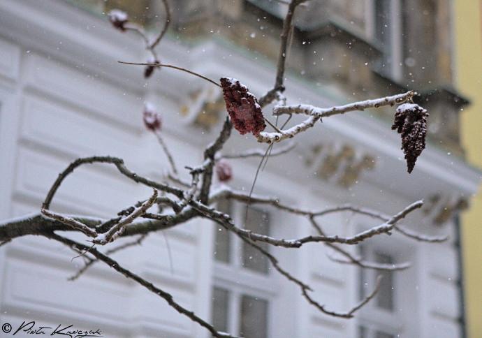 berlin neige