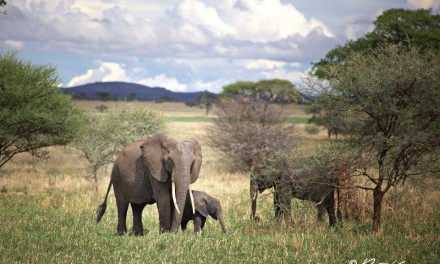 Mon safari en Tanzanie: 5 erreurs à éviter