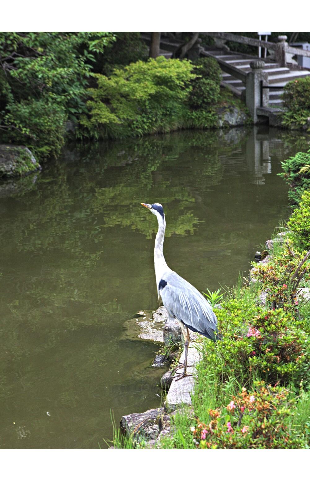 Japon Kyoto (95)