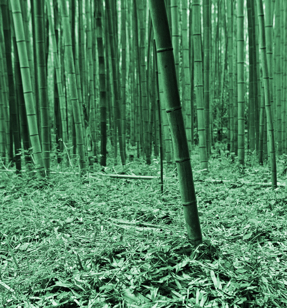 forêt bambous kyoto (1)