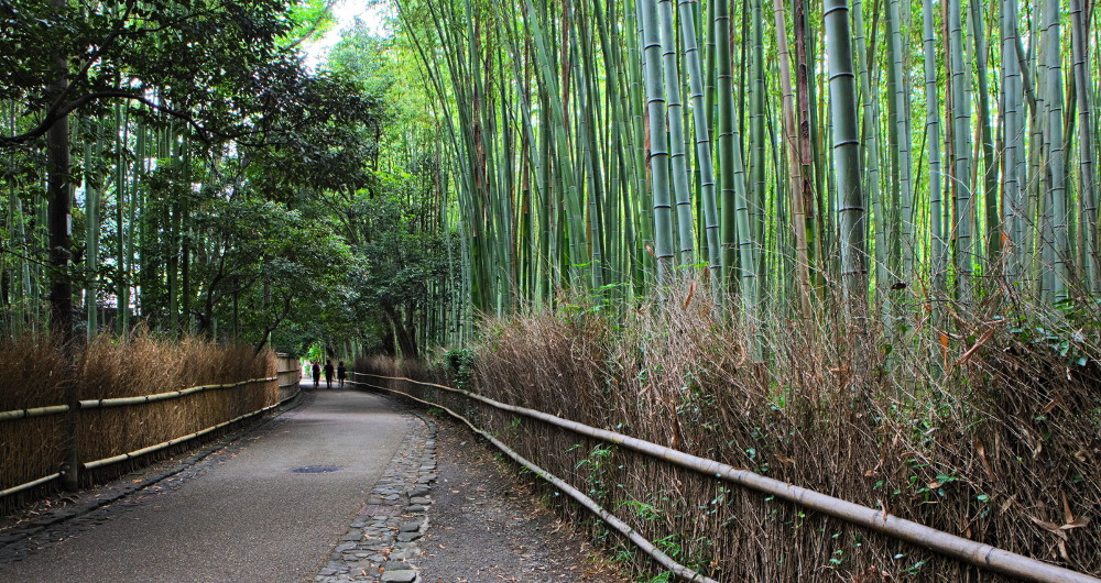 forêt bambous kyoto (2)