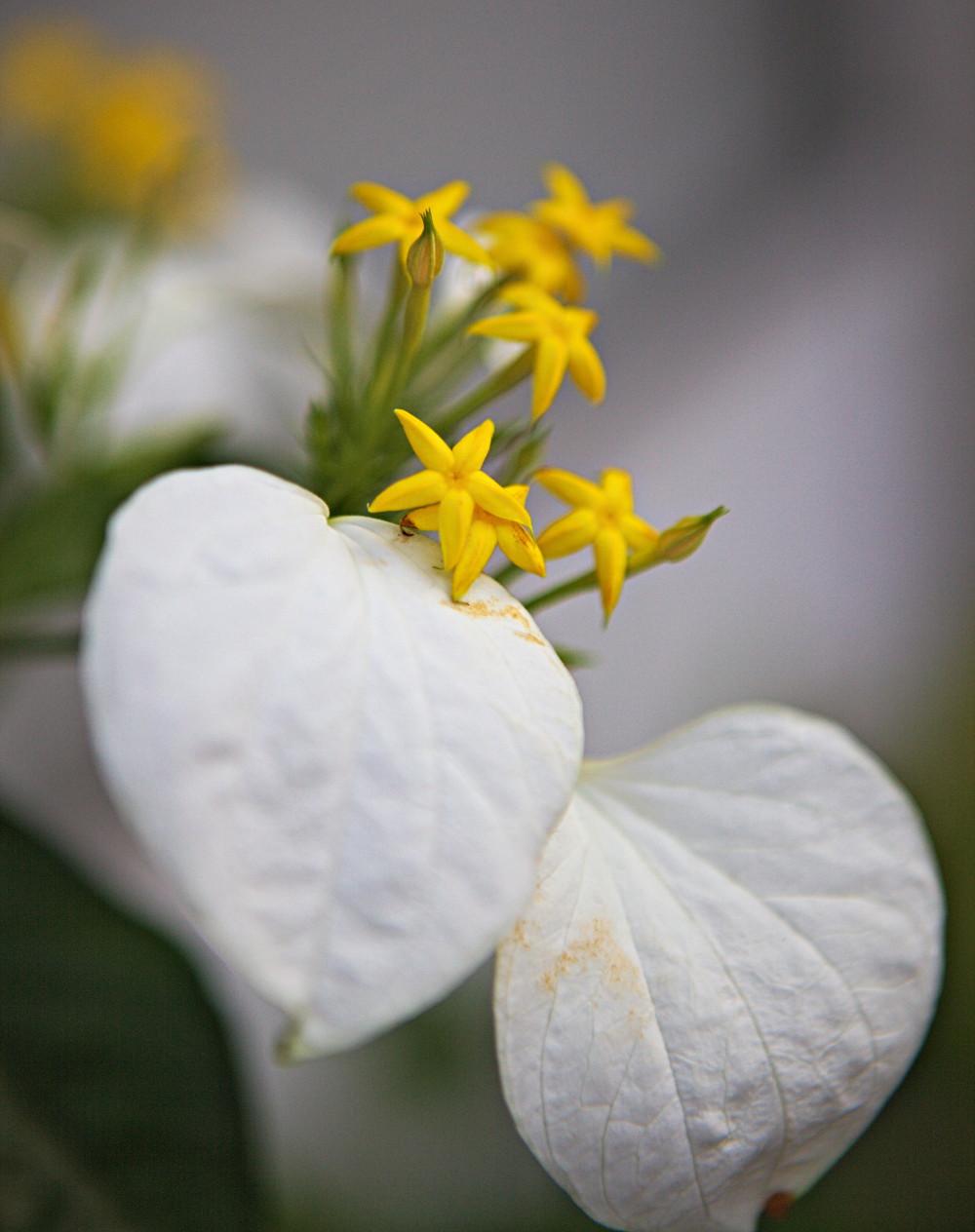 japon kyoto fleur