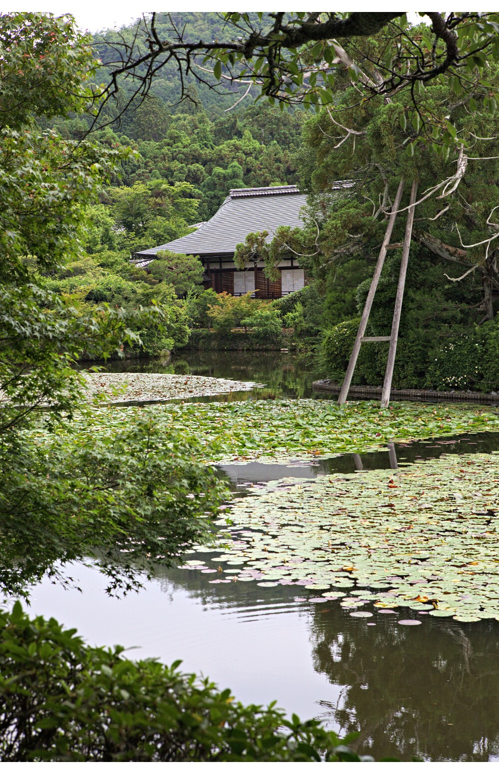 jardin japonais kyoto (1)
