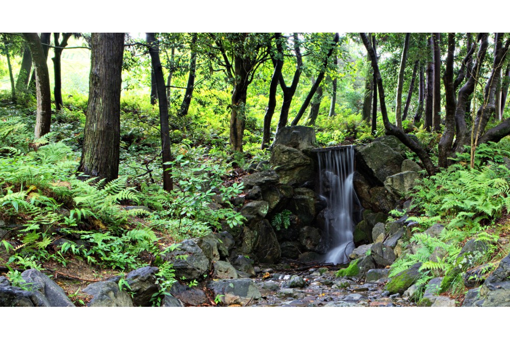 jardin japonais kyoto (4)