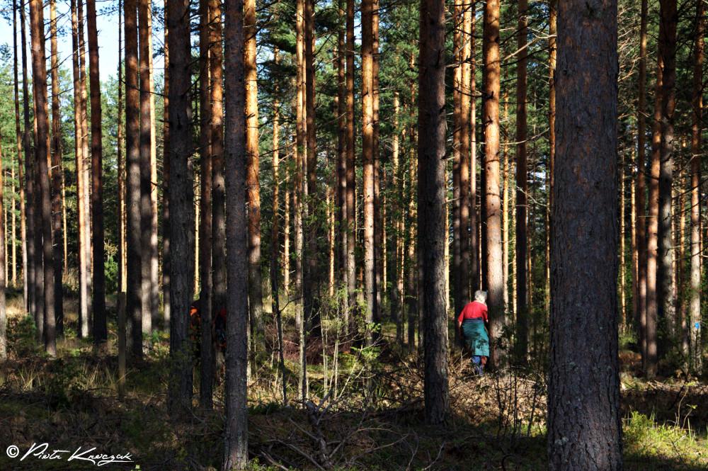 finlande (14)