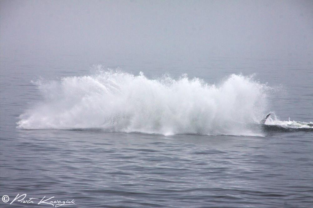 baleine tadoussac (14)