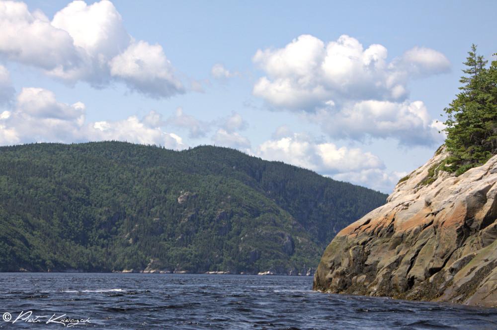baleine tadoussac (4)