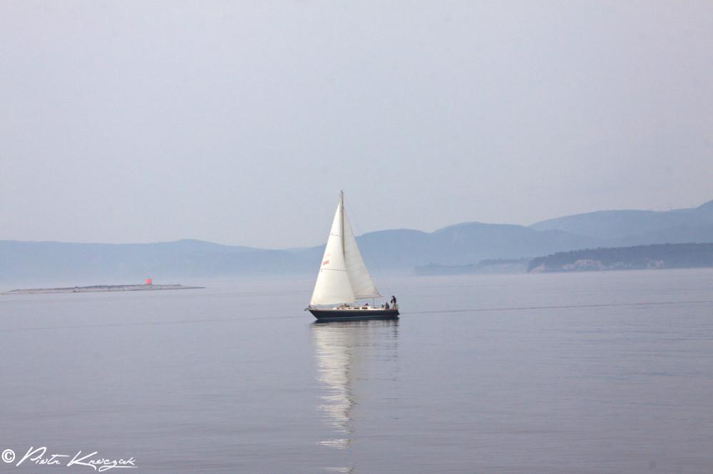 baleine tadoussac (5)