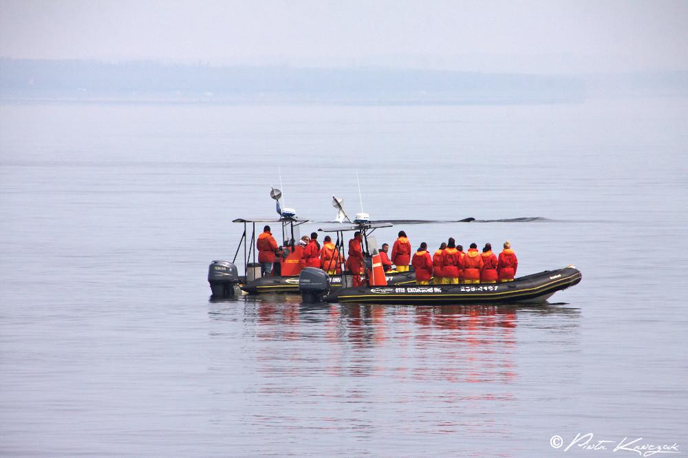 baleine tadoussac (7)
