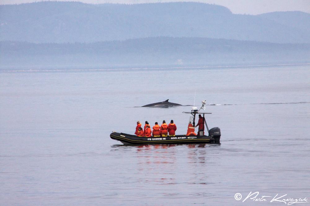 baleine tadoussac (9)