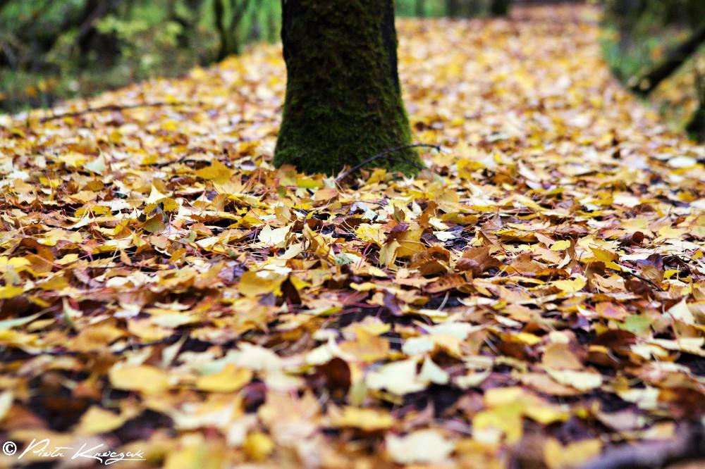 jiuzhaigou chine automne (3)