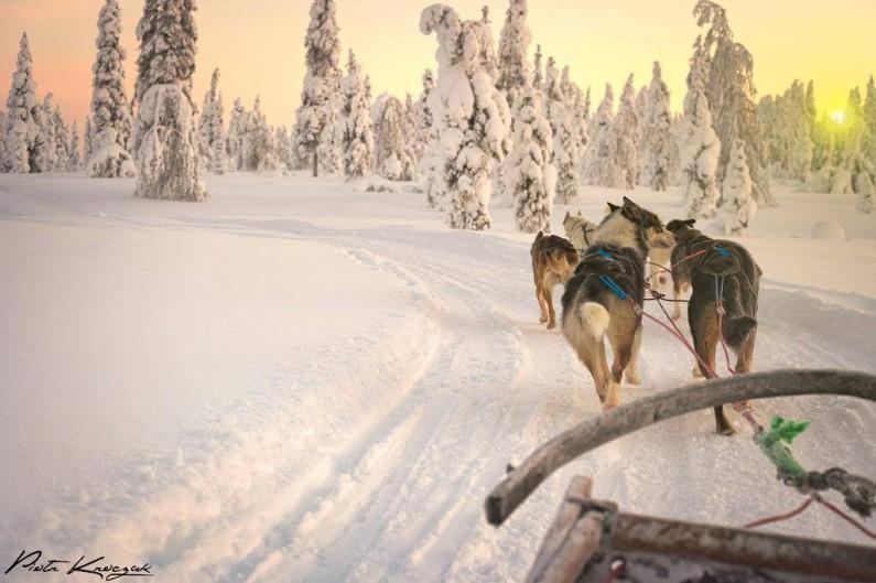 chien de taineau finlande