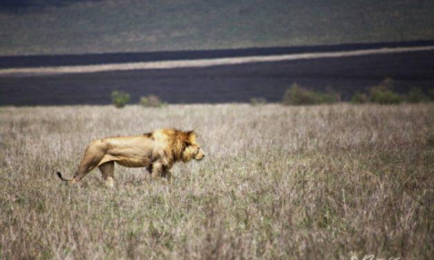 Une nuit dans le parc du Serengeti en Tanzanie.